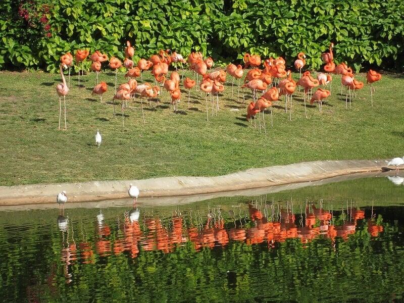 O que fazer em Miami: Jungle Island