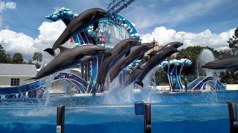 O que fazer em Orlando: SeaWorld