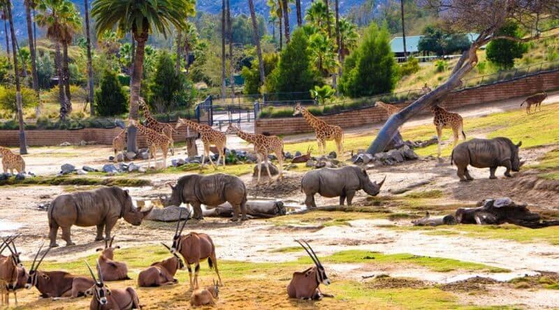 O que fazer em San Diego: San Diego Zoo e Safari Park