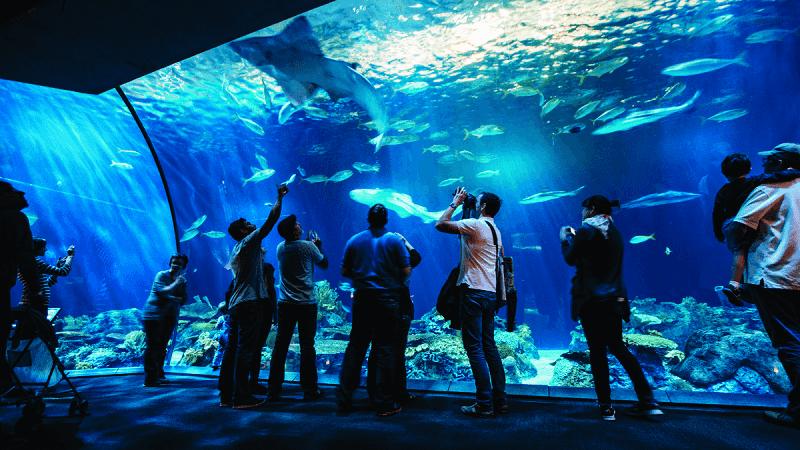 O que fazer em Chicago: Shedd Aquarium