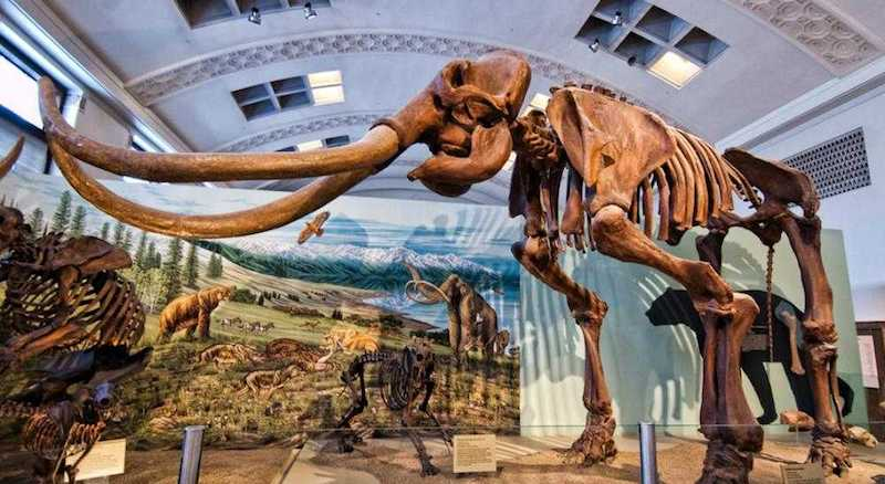 O Que Fazer em Salt Lake City em Utah: Natural History Museum of Utah