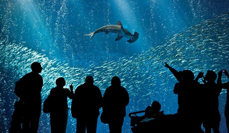 O Que Fazer em Monterey: Aquarium de Monterey