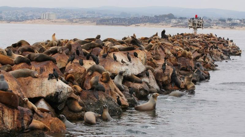 O Que Fazer em Monterey: Costal Guard Pier