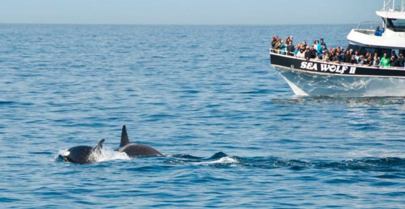 O Que Fazer em Monterey: Passeio de barco para ver as Baleias e os Golfinhos