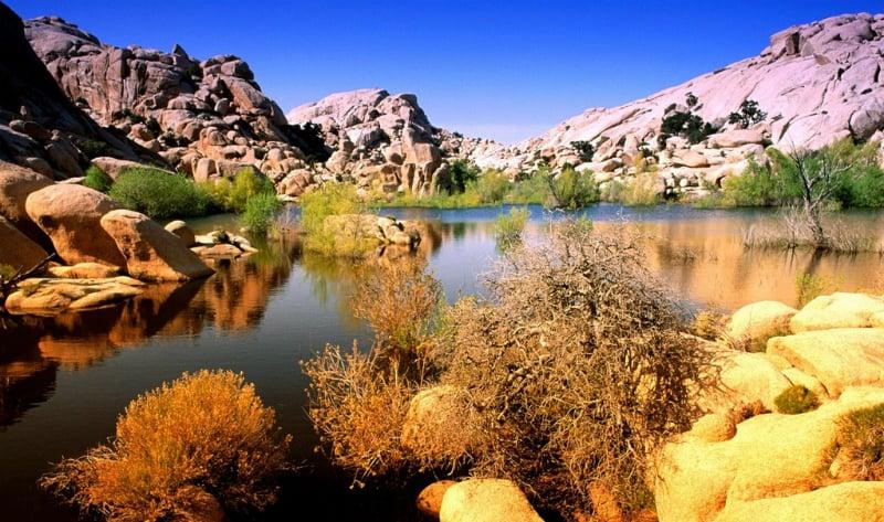 O Que Fazer em Palm Springs: Parque Nacional Joshua Tree