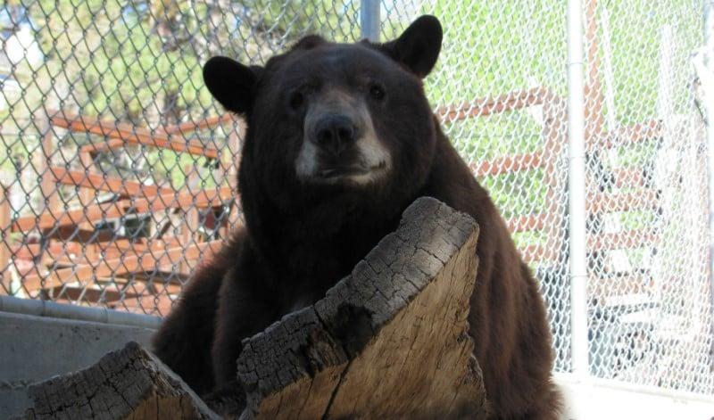 O Que Fazer em Big Bear Lake: Big Bear Alpine Zoo