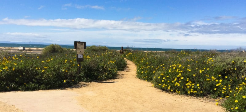 O Que Fazer em Huntington Beach: Reserva Ecológica Bolsa Chica