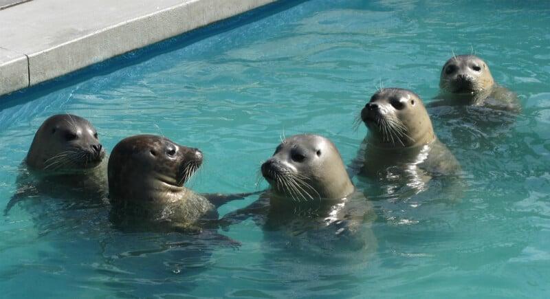 O Que Fazer em Laguna Beach: Pacific Marine Mammal Center