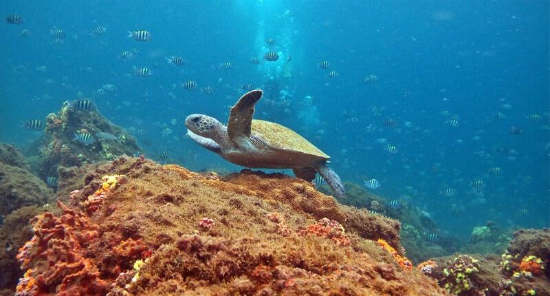 O Que Fazer em Ilha Grande: Mergulho