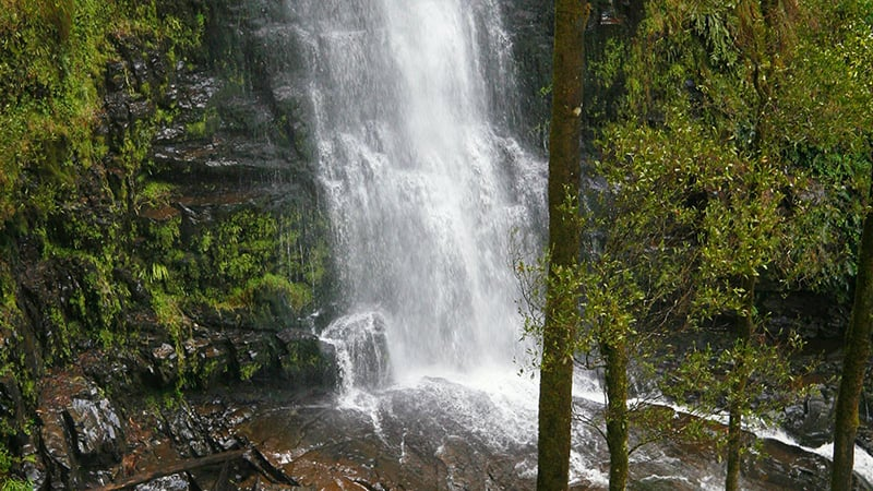 O que fazer em Apollo Bay: Carisbrook Waterfall