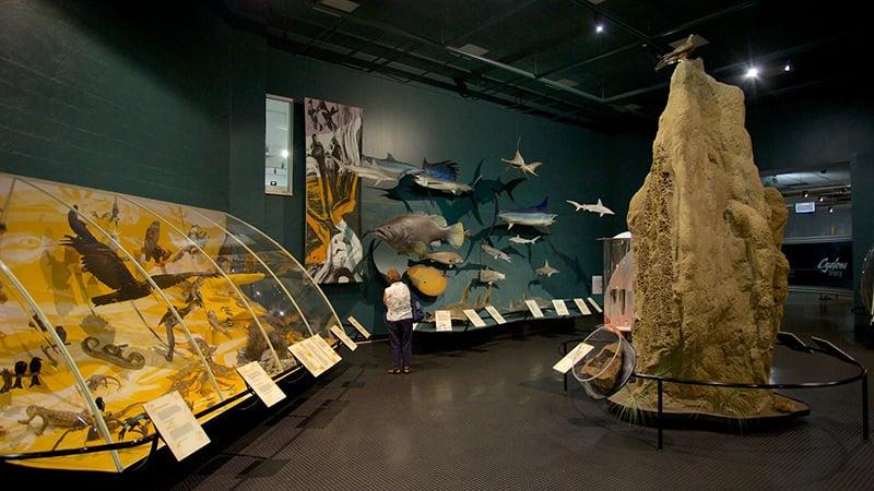 O que fazer em Darwin: Museu e Galeria de Arte do Território do Norte