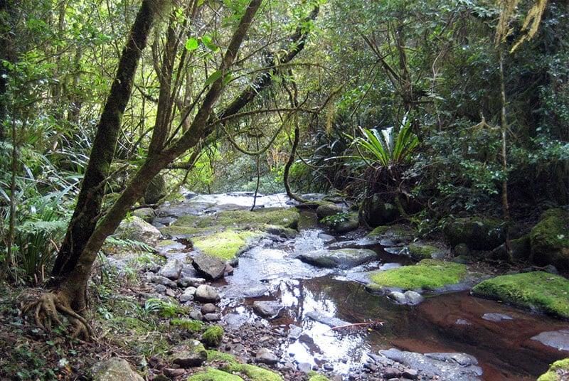 O que fazer em Gold Coast: Circuito Tooloona Creek