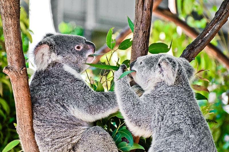 O que fazer em Gold Coast:Currumbin Wildlife Sanctuary