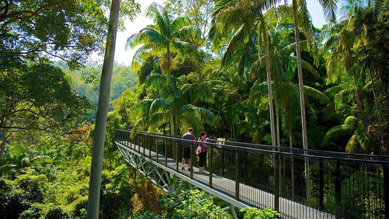O que fazer em Gold Coast: Tamborine Rainforest Skywalk