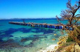 O Que Fazer na Ilha Kangaroo na Austrália