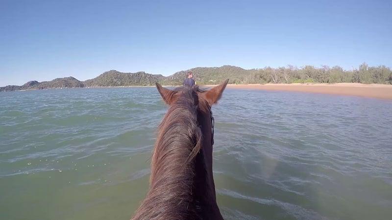 O que fazer em Magnetic Island: Horse Bay Tour