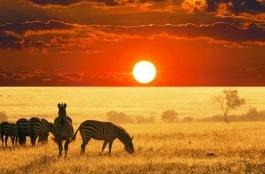 O Que Fazer em Kimberley na África
