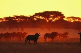 O Que Fazer em Polokwane na África