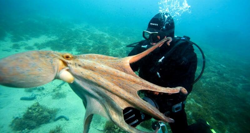 O Que Fazer em Trogir: Mergulhar na ilha de Solta